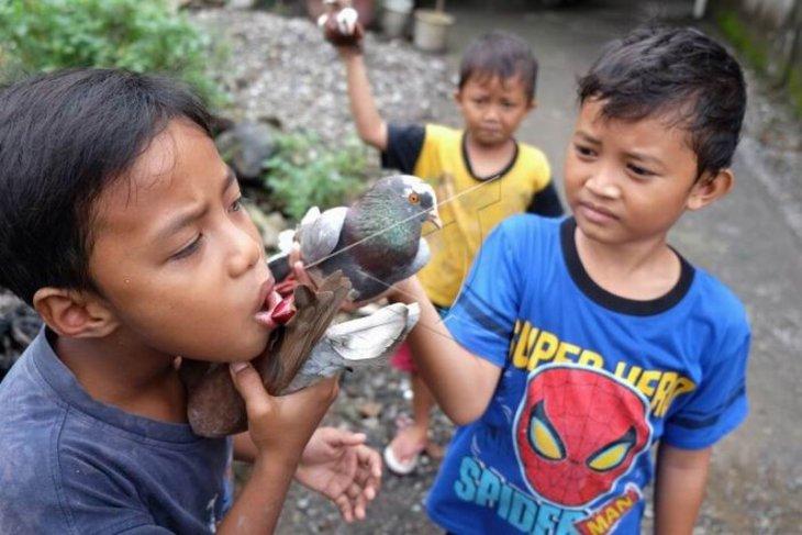 Aktivitas memelihara burung merpati