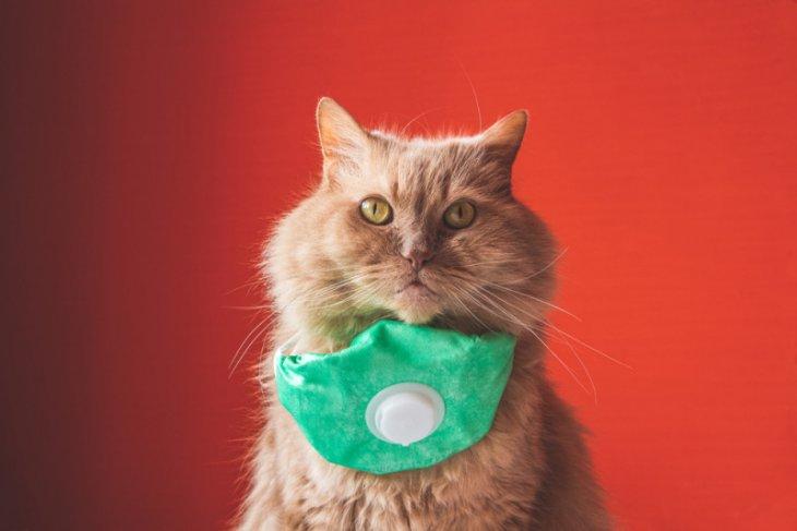 Studi baru, kucing bisa terinfeksi virus COVID-19