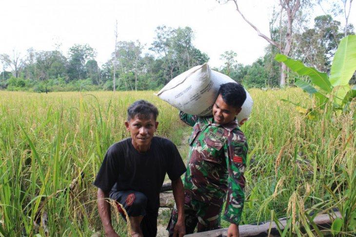 Prajurit Satgas TMMD bantu pikul padi warga
