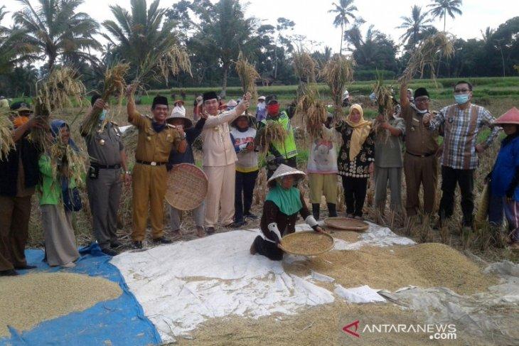 Lahan panen padi Rejang Lebong diperkirakan mencapai 5.500 hektare