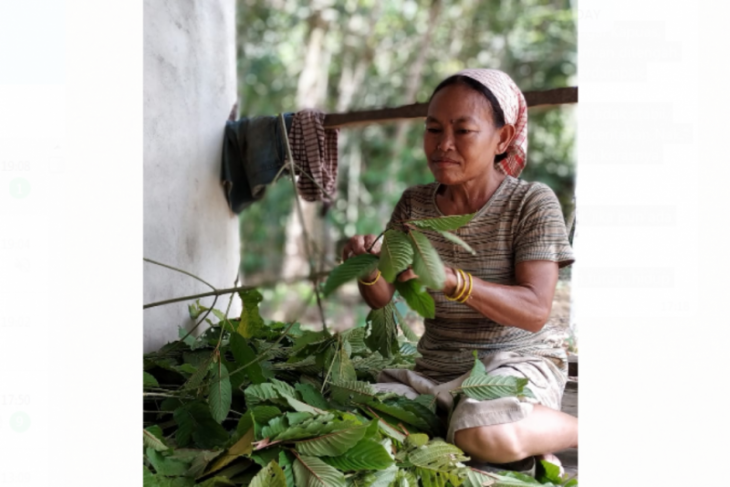 Daniel Johan apresiasi Mentan tetapkan kratom kategori tanaman herbal
