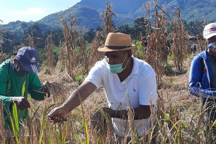 Wabup minta petani tetap mengolah lahan pertanian