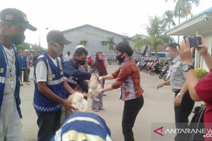 12 ribu ekor ayam didistribusikan secara gratis di Singkawang