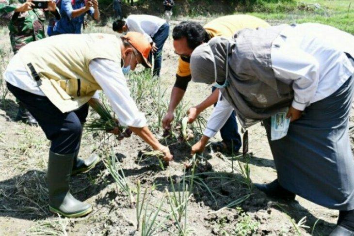 Kabupaten Sergai miliki agrowisata di Dolok Masihul