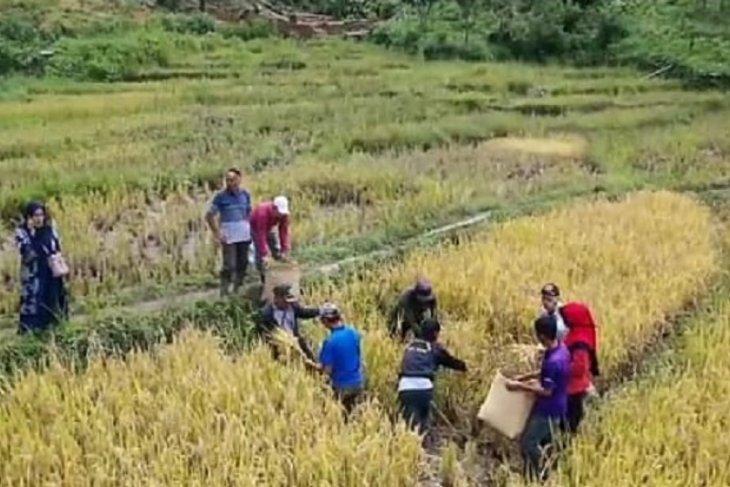 Kostratani  Jangkat Timur dampingi petani di tengah pandemi corona.