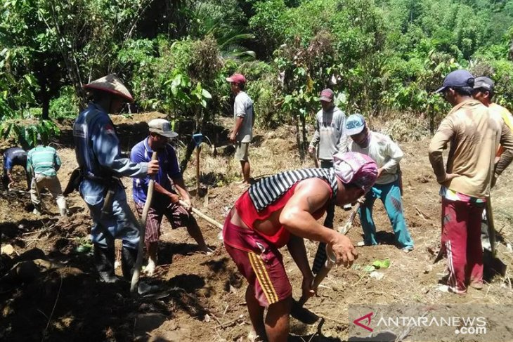 Farm work continues in Central Sulawesi despite COVID-19 pandemic