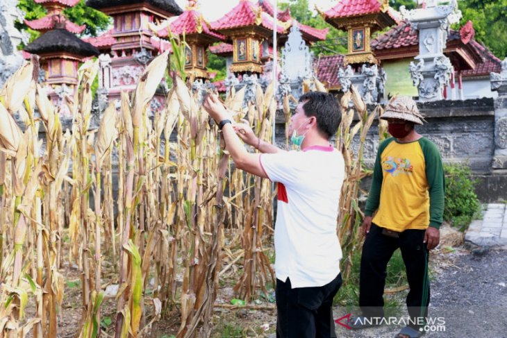 Bupati Klungkung motivasi petani untuk terus produktif