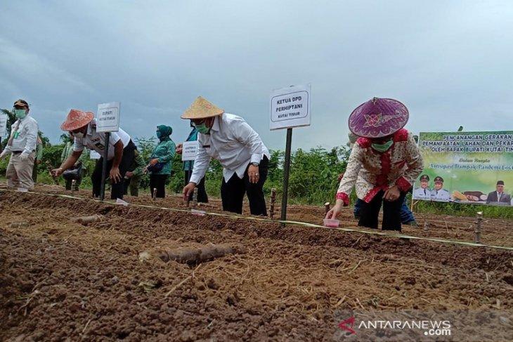 Tanam Jagung dan Singkong Antisipasi Kelangkaan Pangan Selama Pandemi COVID-19