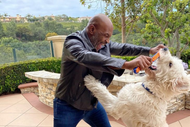 Mike Tyson latih stamina untuk tiga atau empat ronde kegiatan amal
