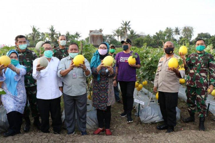 Distan Banten dukung lahan tidur dimanfaatkan untuk penguatan pangan