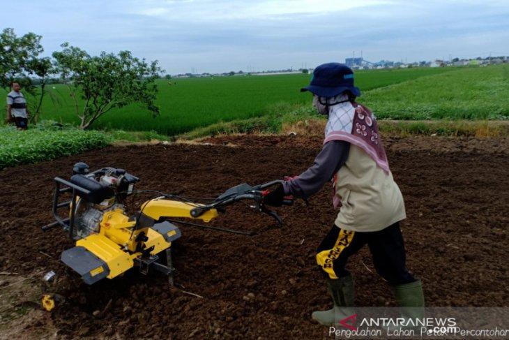 Kementan ajaka milenial  terjun ke dunia pertanian