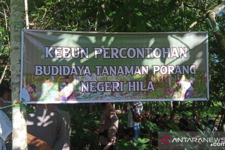 Kapolda Maluku tinjau budidaya tanaman porang di Desa Hila