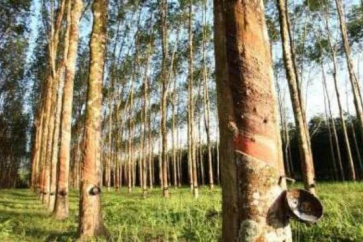 Ministry to procure 12,500 tons farmers' rubber for rubberized asphalt