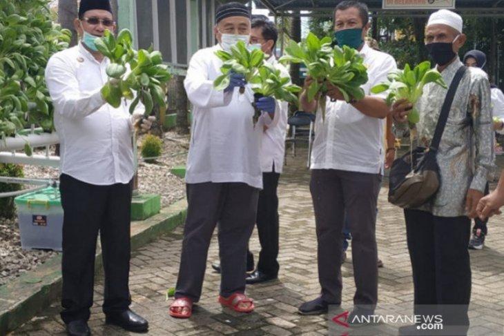 Kotabaru mulai mengembangkan tanaman sayuran dengan hidroponik
