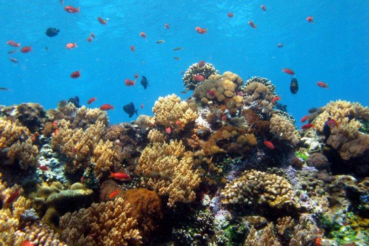 Mission Blue deklarasikan KKP Nusa Penida sebagai