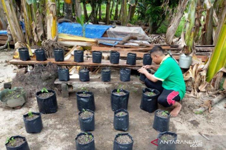 Pandemi COVID-19, mahasiswa Polbangtan Medan giat cocok tanam di pekarangan rumah