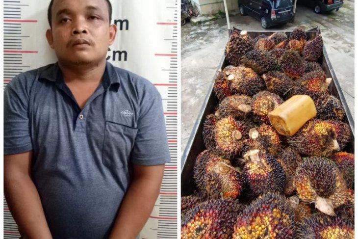 Saat warga berlebaran, Jarwo curi sawit tujuh ton ditangkap Polisi Salapian Langkat