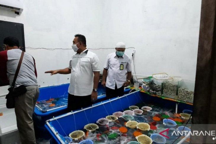 Polisi gagalkan penyelundupan benih lobster senilai Rp6,73 miliar