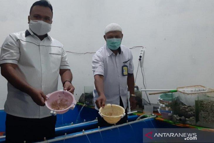 Polisi Jambi tangkap lima orang terkait  penyelundupan benih lobster