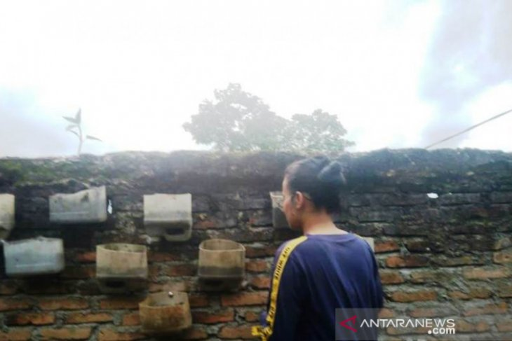 Mahasiswi Polbangtan: Lahan sempit bukan alasan tak bisa bercocok tanam