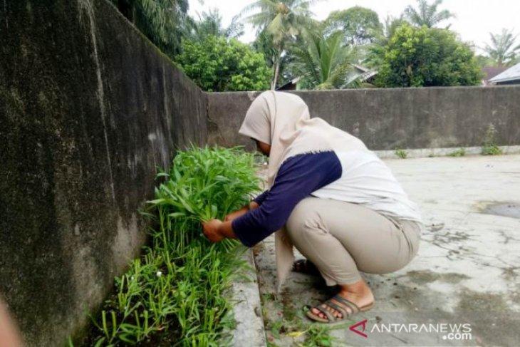 Mahasiswi Polbangtan sebut 1 meter lahan kosong cukup berarti untuk kehidupan
