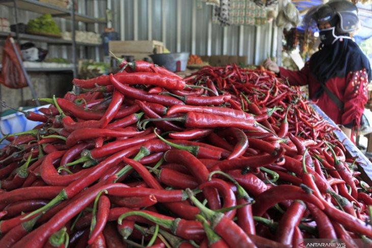 Harga cabai merah di pasar Medan  anjlok