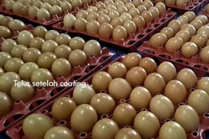 Balitbangtan kembangkan teknologi untuk penanganan telur ayam