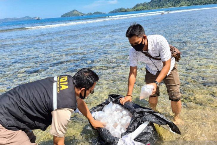 BKIPM Jambi perkuat pengawasan di jalur penyelundupan benih lobster