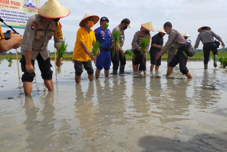 Polres dan Pemkab Asahan lakukan gerakan tanam padi