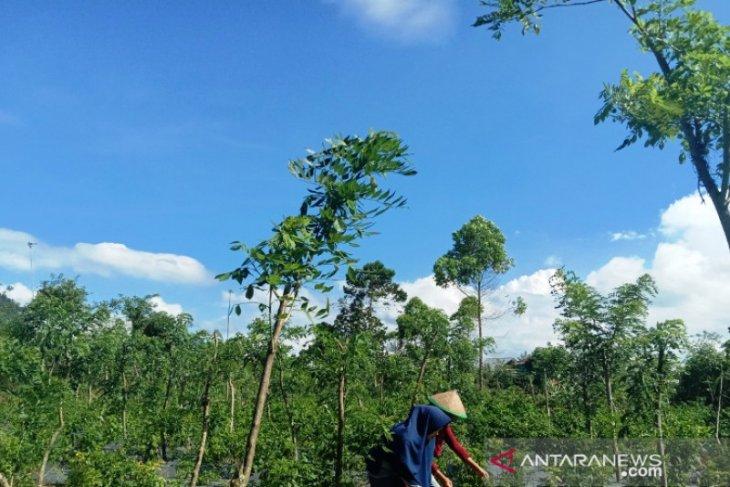 Minimalisir pengeluaran, mahasiswa Polbangtan Medan ajak petani Bengkulu tanam cabai