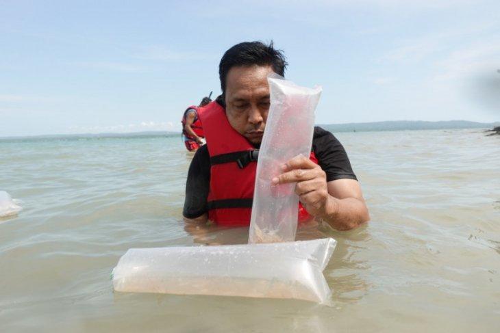 KKP lepasliarkan 43.000 benih lobster di Pulau Liwungan Pandeglang