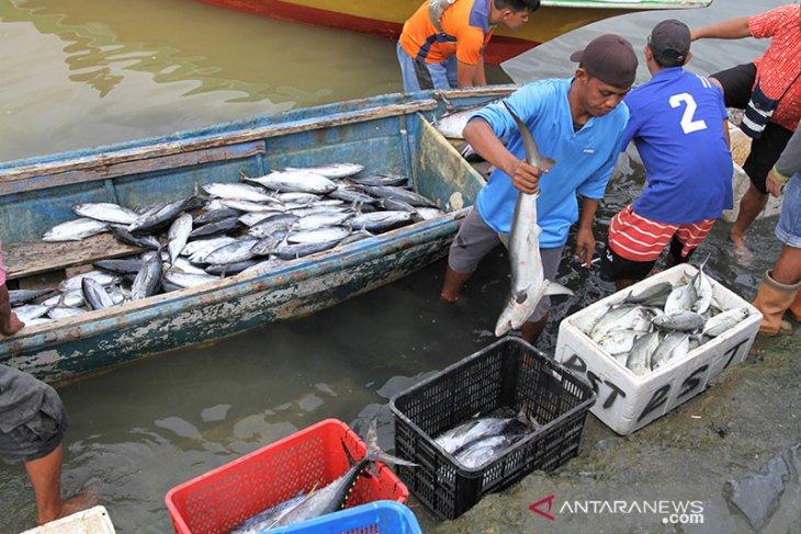 Ini penyebab naiknya harga ikan di Abdya
