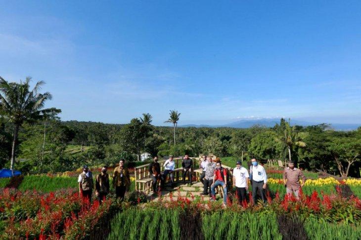 Agrowisata Tamansuruh Banyuwangi jadi bagian program pengembangan kawasan strategis pariwisata nasional