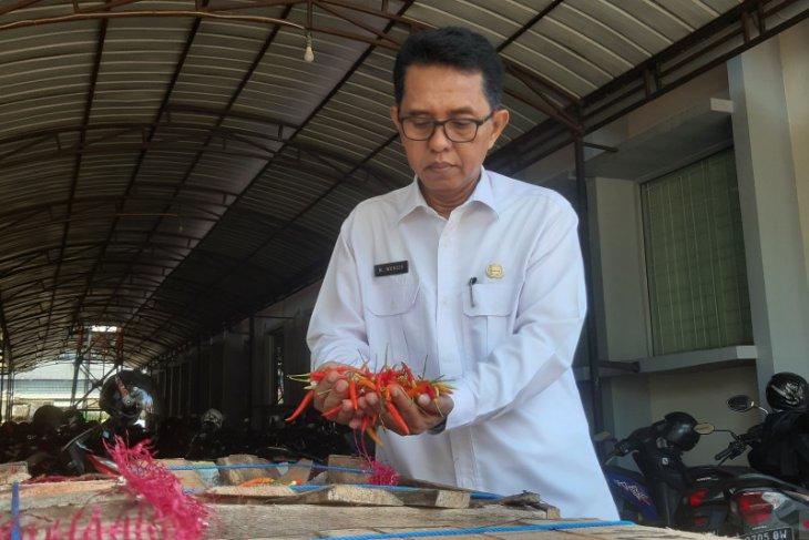 Dinas Pangan Kalimantan Barat gelar pasar murah cabai rawit