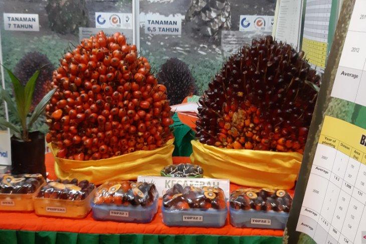 Disbun Kalimantan Barat dorong hilirisasi produk sektor perkebunan