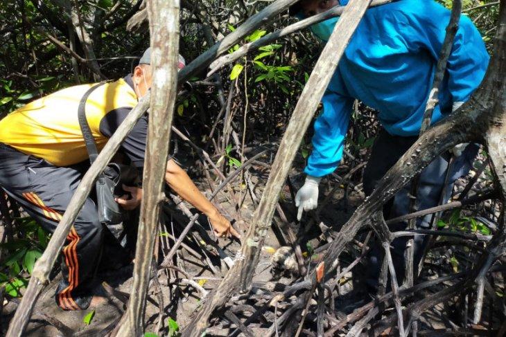 Polisi dalami temuan tengkorak manusia di hutan bakau