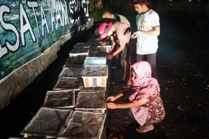 BBKSDA Sumut  lepasliarkan ratusan burung gelatik di TWA Sibolangit