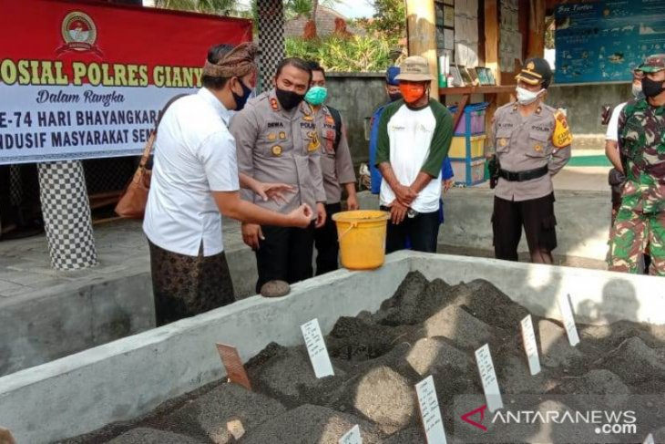 Hari Bhayangkara, Kapolres Gianyar lepas tukik di Pantai Saba