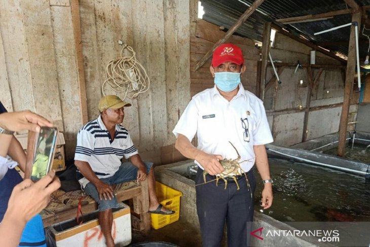 Ekspor lobster asal Mukomuko terhenti sejak pandemi COVID-19