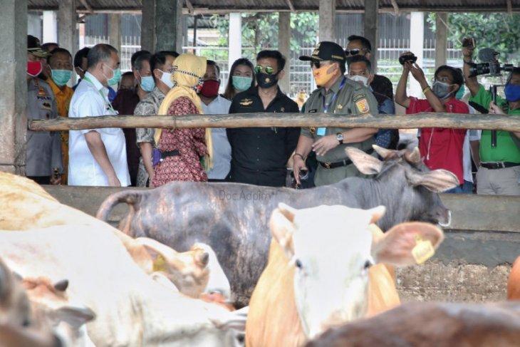 Pemprov Lampung bertekad penuhi kebutuhan ternak nasional