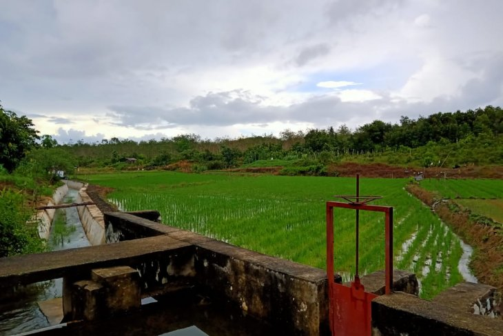 Petani Belitung diminta antisipasi kekeringan sawah