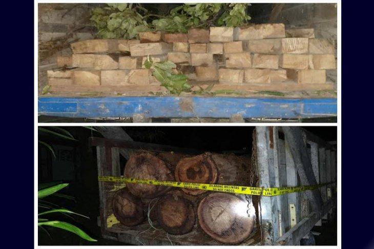 Dua sopir truk pengangkut kayu ilegal ditangkap polisi