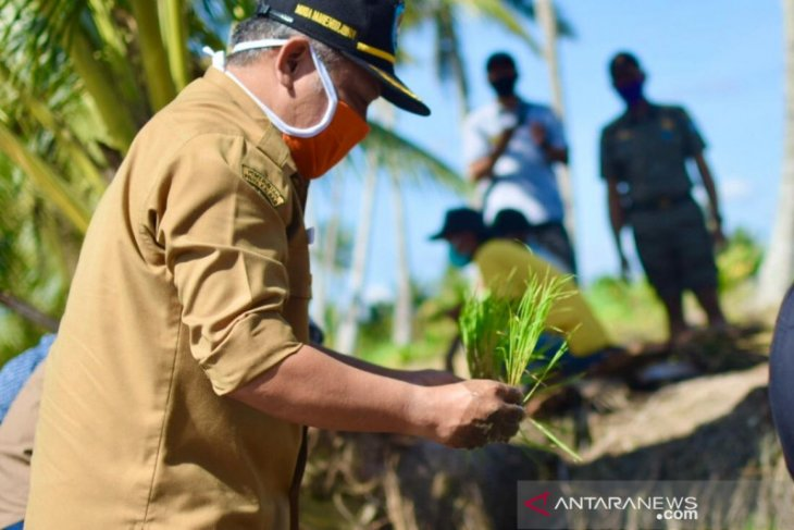 38.000 hektare lahan pertanian di Kubu Raya masuk program LP2B