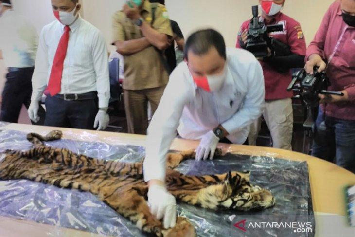 Empat pelaku  perdagangan harimau sumatera diamankan polisi Aceh