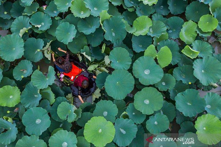 Ketum PDIP Megawati pilih bunga Lotus gerakan cinta Ciliwung bersih