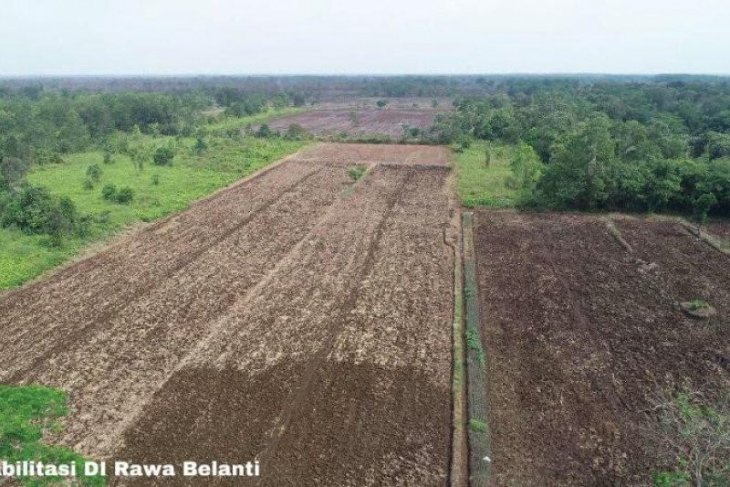 PUPR Ministry to remodel irrigation system in planned food estate