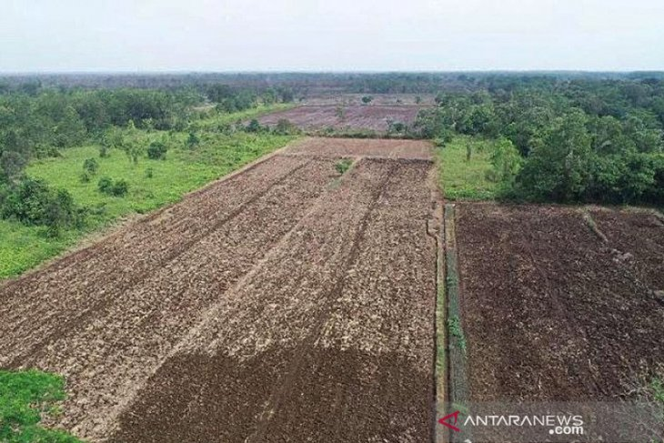PUPR Ministry to remodel irrigation system in C Kalimantan