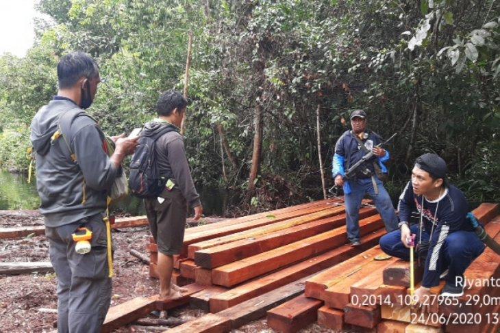 Tim gabungan ringkus pelaku pembalakan kayu di hutan KHDTK Untan Pontianak