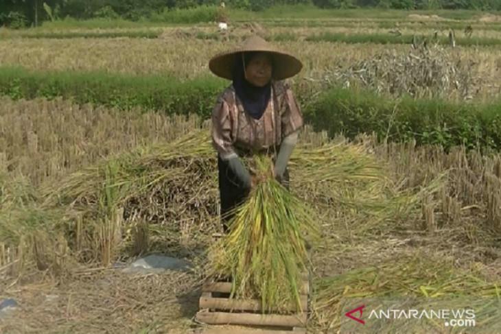 Persediaan beras Kabupaten Sukabumi mencukupi hingga 2021