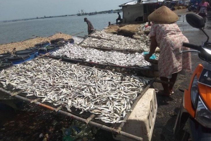 Produksi ikan asin di Teluk Labuan Pandeglang turun